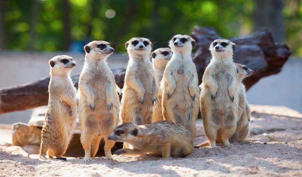 Bijzonder dierenpark in Brabant