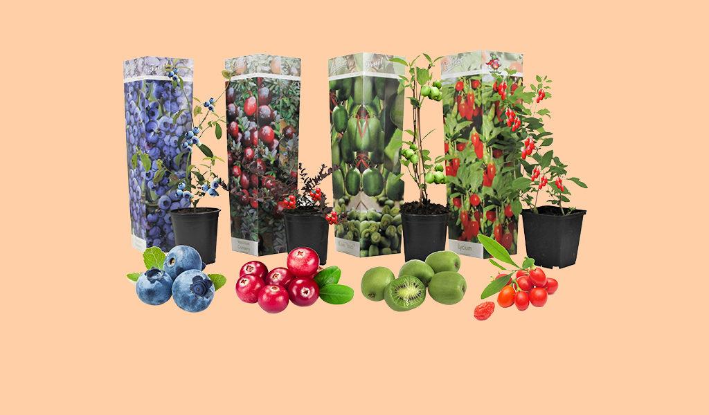 Fruitplanten: maak je eigen smoothie