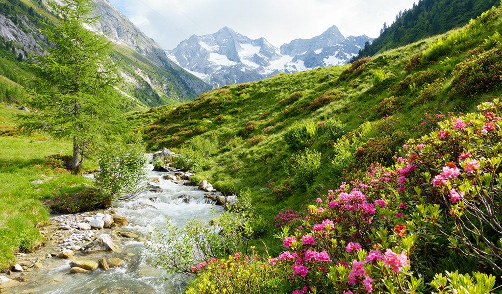4 8 dgn in de Alpen